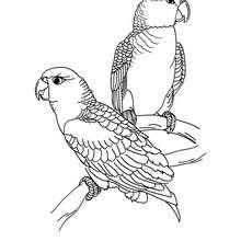 Dibujo para colorear LOROS - Dibujos para Colorear y Pintar - Dibujos para colorear ANIMALES - Dibujos AVES para colorear - Dibujo para colorear LORO