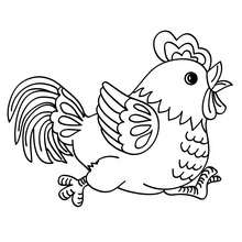 Pollito de Gallo