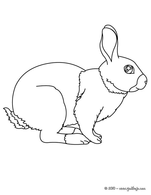 Dibujos para colorear conejos - es.hellokids.com
