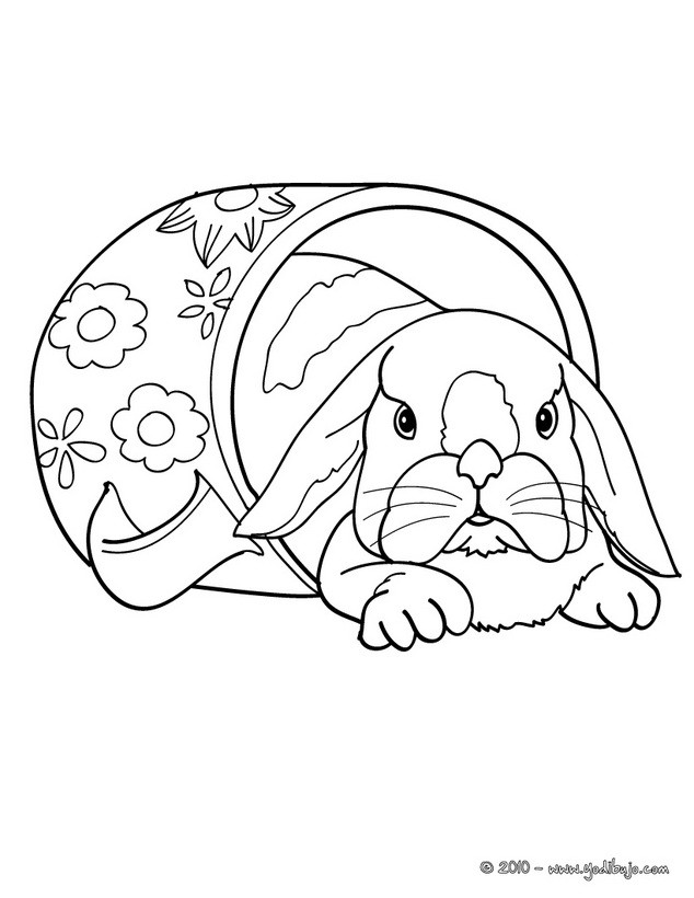 Dibujos Para Colorear Un Conejo Belier Eshellokidscom