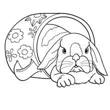 Dibujo para colorear un conejo Belier - Dibujos para Colorear y Pintar - Dibujos para colorear ANIMALES - Dibujos ANIMALES DE GRANJA para colorear - Colorear CONEJOS - Pintar CONEJO