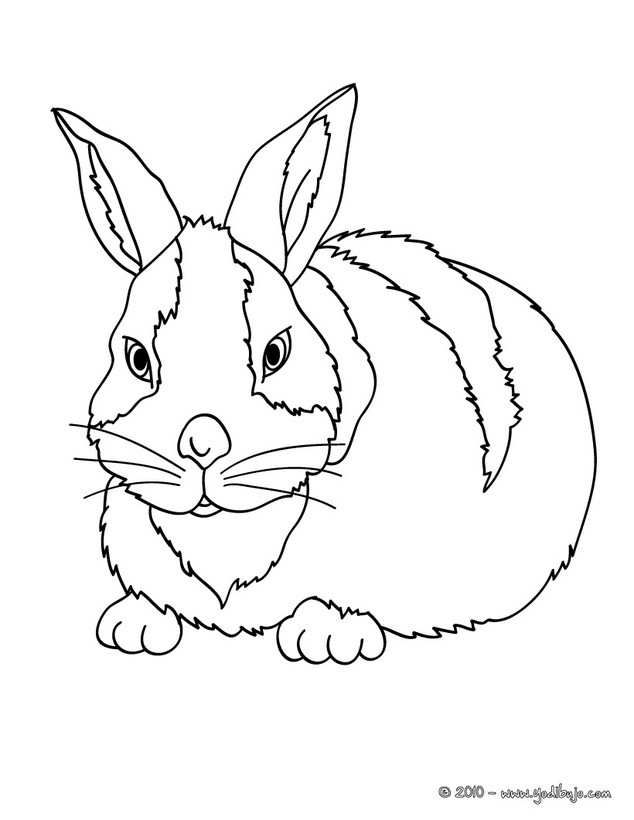 Dibujo para colorear conejo Rex Dibujo para colorear un conejo Belier