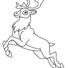 Dibujo para pintar un ciervo saltando - Dibujos para Colorear y Pintar - Dibujos para colorear ANIMALES - Dibujos ANIMALES SALVAJES para colorear - Dibujos ANIMALES DE LA SELVA para colorear - Colorear CIERVO