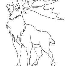 Dibujo para colorear CARIBU - Dibujos para Colorear y Pintar - Dibujos para colorear ANIMALES - Dibujos ANIMALES SALVAJES para colorear - Dibujos ANIMALES DE LA SELVA para colorear - Colorear CIERVO