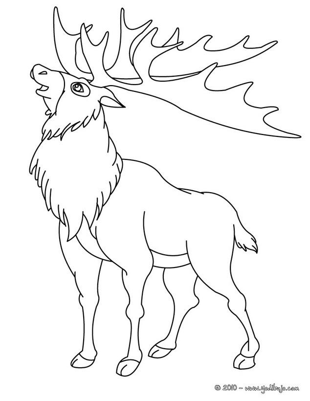 Dibujos para colorear un ciervo - es.hellokids.com