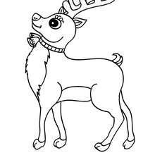 Dibujo para colorear CACHORRO RENO - Dibujos para Colorear y Pintar - Dibujos para colorear ANIMALES - Dibujos ANIMALES SALVAJES para colorear - Dibujos ANIMALES DE LA SELVA para colorear - Colorear CIERVO