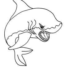 Dibujo de TIBURON BLANCO - Dibujos para Colorear y Pintar - Dibujos para colorear ANIMALES - Dibujos ANIMALES MARINOS para colorear - Colorear MAMIFEROS MARINOS - Colorear TIBURONES