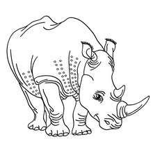 Dibujo RINOCERONTE para colorear - Dibujos para Colorear y Pintar - Dibujos para colorear ANIMALES - Dibujos ANIMALES SALVAJES para colorear - Dibujos ANIMALES DE LA SABANA para colorear - Colorear RINOCERONTE