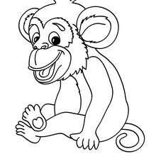 Dibujo para colorear : Mono chimpancé