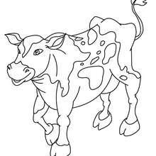 Dibujo par colorear VACA - Dibujos para Colorear y Pintar - Dibujos para colorear ANIMALES - Dibujos ANIMALES DE GRANJA para colorear - Colorear VACAS