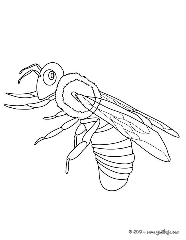 Worksheet. Dibujos INSECTOS para colorear  25 dibujos de animales para