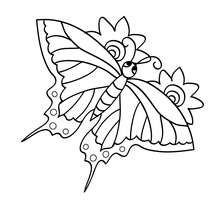 Dibujo para colorear : MARIPOSA MACAON volando