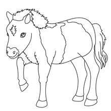 Bebe poni para colorear - Dibujos para Colorear y Pintar - Dibujos para colorear ANIMALES - Colorear CABALLOS - Dibujos de PONIS para colorear - Dibujos de PONIS BEBES