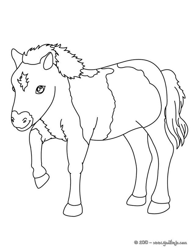 Dibujos para colorear bebe poni  eshellokidscom