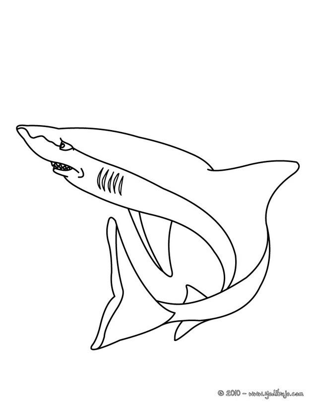 Dibujos para colorear tiburon tigre - es.hellokids.com