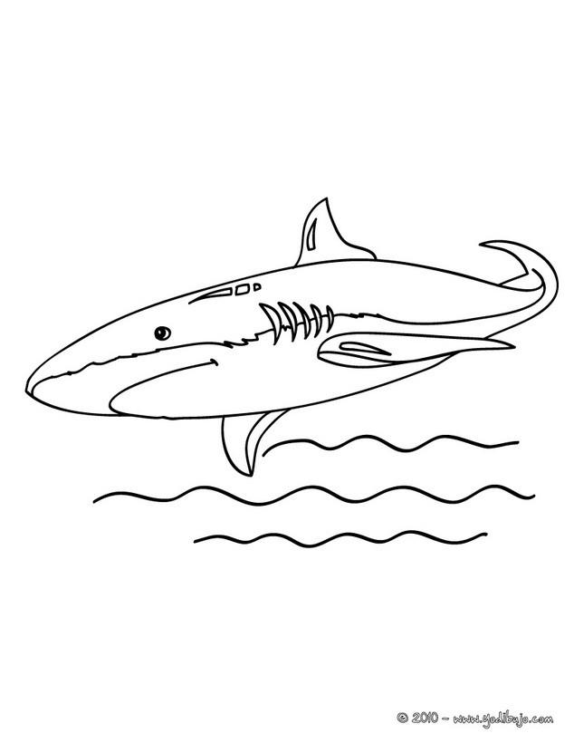 Dibujo para colorear : Tiburón Azul