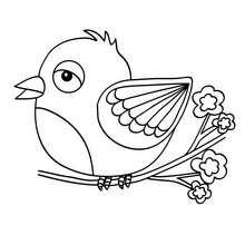 Dibujo de PAJARITO - Dibujos para Colorear y Pintar - Dibujos para colorear ANIMALES - Dibujos PAJAROS para colorear - Dibujos para colorear e imprimir PAJAROS