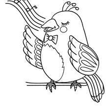 Dibujo RUISEÑOR - Dibujos para Colorear y Pintar - Dibujos para colorear ANIMALES - Dibujos PAJAROS para colorear - Colorear pajaro RUISEÑOR