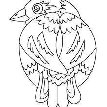 Dibujo de CODORNIZ - Dibujos para Colorear y Pintar - Dibujos para colorear ANIMALES - Dibujos PAJAROS para colorear - Dibujos para pintar PAJAROS