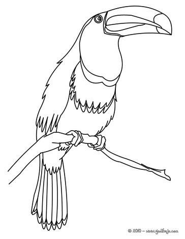 Dibujos Para Colorear Tucan Eshellokidscom
