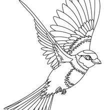 Dibujo de AVE VOLANDO - Dibujos para Colorear y Pintar - Dibujos para colorear ANIMALES - Dibujos AVES para colorear - Dibujos para colorear e imprimir AVES