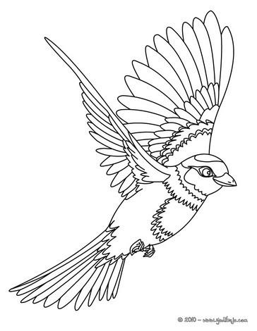 Dibujo para colorear : Jilguero volando