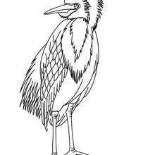 Dibujo GARZA - Dibujos para Colorear y Pintar - Dibujos para colorear ANIMALES - Dibujos AVES para colorear - Dibujos para colorear GARZAS