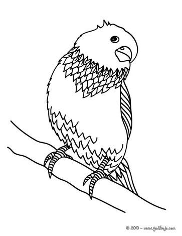 Dibujos para colorear paloma - es.hellokids.com