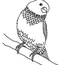 Dibujo de un PERICO - Dibujos para Colorear y Pintar - Dibujos para colorear ANIMALES - Dibujos AVES para colorear - Dibujos para colorear PERICO