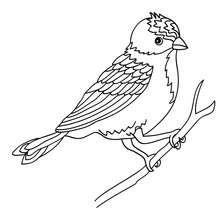 Dibujo PAJARO CARPINTERO - Dibujos para Colorear y Pintar - Dibujos para colorear ANIMALES - Dibujos PAJAROS para colorear - Colorear PAJARO CARPINTERO
