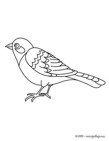 Dibujos Para Colorear Pájaro Tropical Eshellokidscom
