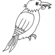 Dibujo de un MARTIN PESCADOR - Dibujos para Colorear y Pintar - Dibujos para colorear ANIMALES - Dibujos PAJAROS para colorear - Colorear MARTIN PESCADOR