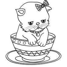 Dibujo de GATO PERSA en una tasa - Dibujos para Colorear y Pintar - Dibujos para colorear ANIMALES - Dibujos GATOS para colorear - Dibujos para colorear GATOS PERSAS