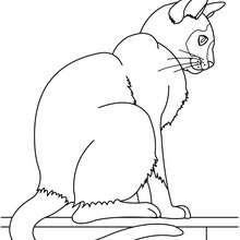 Dibujo para colorear : Gato Azul Ruso