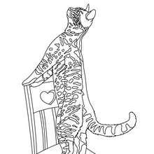 Dibujo GATO JUGANDO - Dibujos para Colorear y Pintar - Dibujos para colorear ANIMALES - Dibujos GATOS para colorear - Dibujos para colorear GATO CALLEJERO