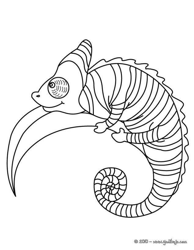 Dibujos REPTILES para colorear - 37 dibujos de animales para ...