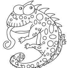 Dibujo CAMELEON CHISTOSO - Dibujos para Colorear y Pintar - Dibujos para colorear ANIMALES - Dibujos REPTILES para colorear - Colorear dibujos CAMELEON