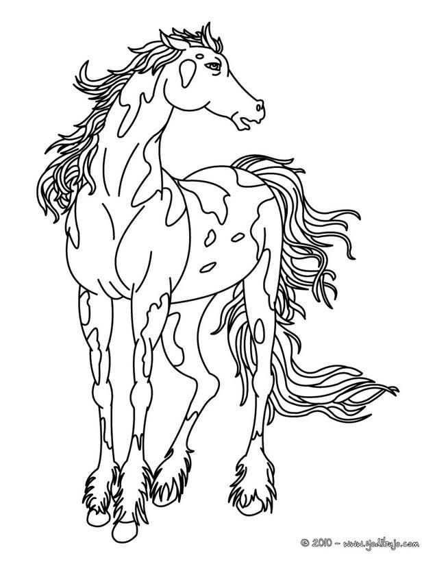 Worksheet. Dibujos para colorear perfil de un caballo  eshellokidscom