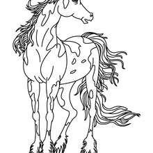 Dibujo CABALLO FRISON - Dibujos para Colorear y Pintar - Dibujos para colorear ANIMALES - Colorear CABALLOS - Dibujos de CABALLOS para colorear e imprimir