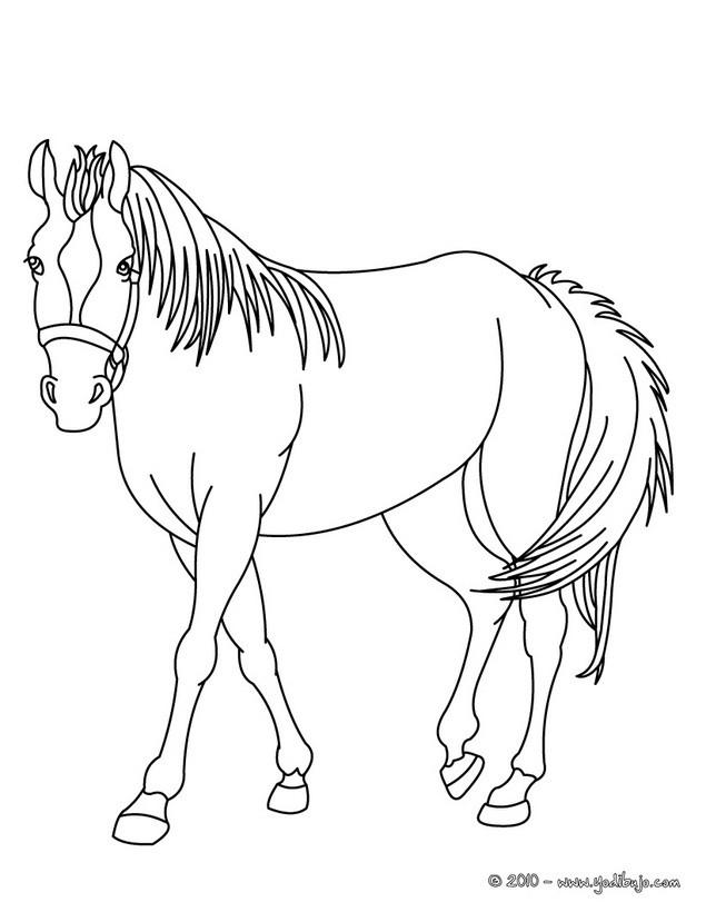 Colorear CABALLOS   51 dibujos de animales para colorear y pintar