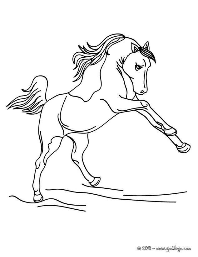 Dibujos para colorear caballo pura sangre espaÑol - es.hellokids.com