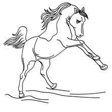 Dibujo CABALLO PURA SANGRE ESPAÑOL - Dibujos para Colorear y Pintar - Dibujos para colorear ANIMALES - Colorear CABALLOS - Colorear CABALLOS PURA SANGRE