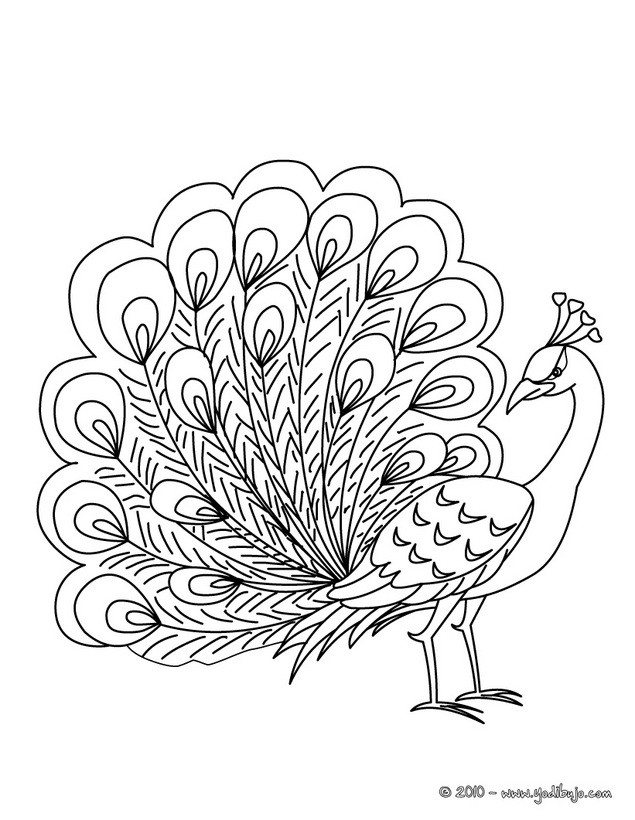 Dibujos para colorear pájaro tropical - es.hellokids.com