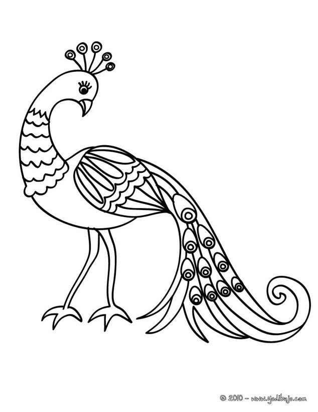 Dibujo de un hermoso PAVO REAL - Dibujo para colorear PAVO REAL