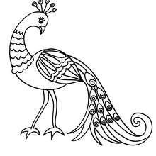 Dibujo de un hermoso PAVO REAL - Dibujos para Colorear y Pintar - Dibujos para colorear ANIMALES - Dibujos AVES para colorear - Dibujo para colorear PAVO REAL