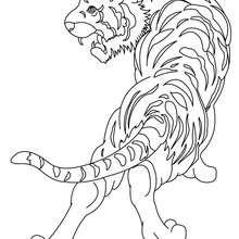Dibujo TIGRE SALVAJE - Dibujos para Colorear y Pintar - Dibujos para colorear ANIMALES - Dibujos ANIMALES SALVAJES para colorear - Dibujos para colorear e imprimir ANIMALES SALVAJES - Colorear TIGRE