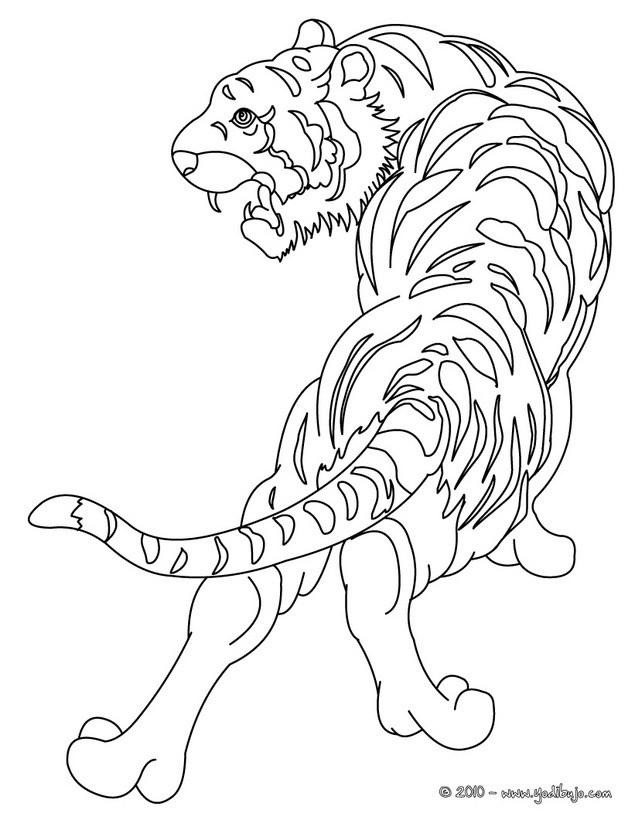 Dibujos Para Colorear Tigre Salvaje Eshellokidscom