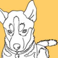 animales, Dibujos PERROS para colorear