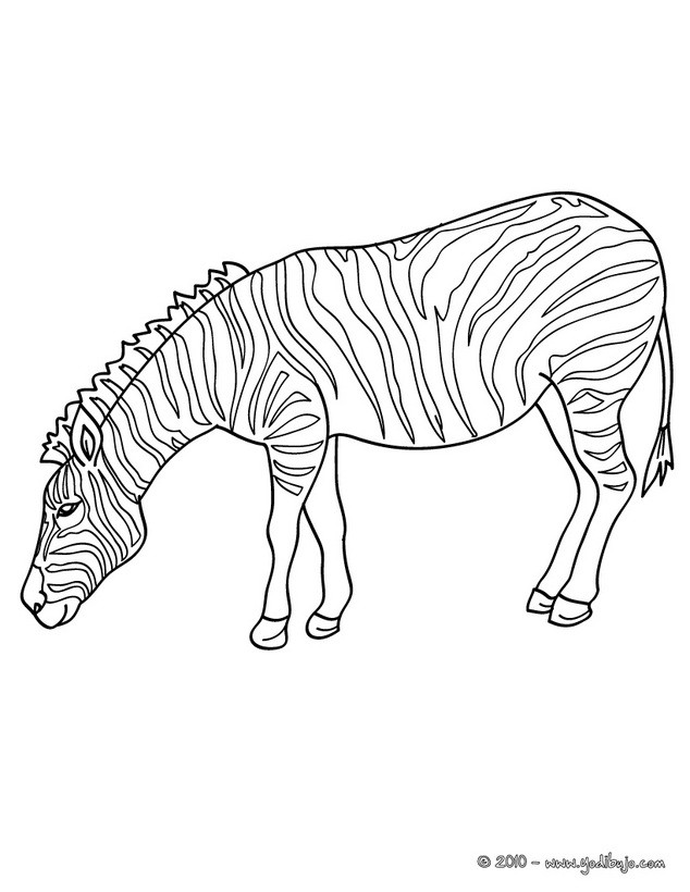 Dibujos para colorear jirafa que bebe un coctel - es.hellokids.com