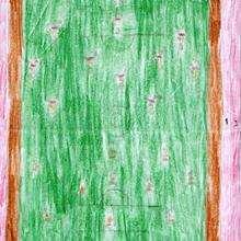 Ilustración infantil : Dibujo de Nicolas Conde - 8 años